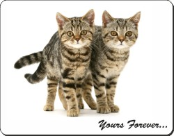 Tabby Cats with Sentiment, AC-171