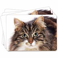 Face of Tortoiseshell Cat Picture Placemats in Gift Box