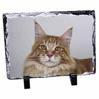 Pretty Face of a Ginger Cat Photo Slate Christmas Gift Idea