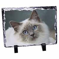 Face of a Beautiful Birman Cat Photo Slate Photo Ornament Gift