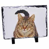 Face of Brown Tabby Cat Photo Slate Photo Ornament Gift