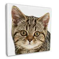 "Face of Brown Tabby Cat 12""x12"" Canvas Wall Art Picture Print"