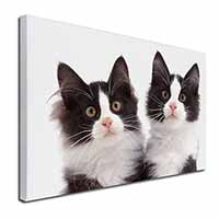"Black and White Kittens Ex Large 30""x20"" Picture Wall Art"