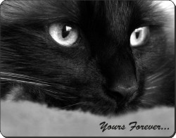 "Black Cat ""Yours Forever..."", AC-1y"