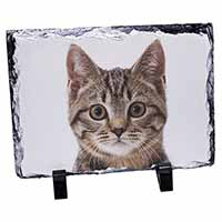 Brown Tabby Cats Face Photo Slate Christmas Gift Idea