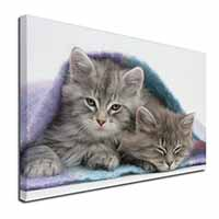 "Kittens Under Blanket Ex Large 30""x20"" Picture Wall Art"