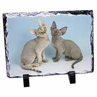 Two Devon Rex Cats Photo Slate Christmas Gift Idea