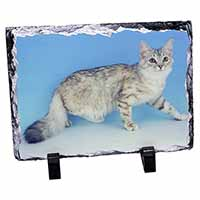 Siberian Silver Cat Photo Slate Christmas Gift Idea