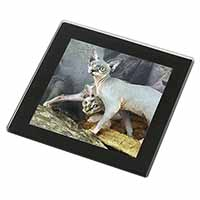 Sphynx Cat Black Rim High Quality Glass Coaster, Great Present