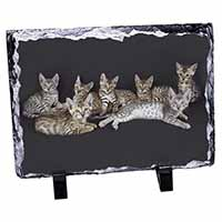 Bengal Kittens Posing for Camera Photo Slate Photo Ornament Gift