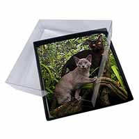 4x Two Burmese Cats Picture Table Coasters Set in Gift Box