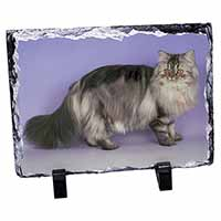 Silver Grey Persian Cat Photo Slate Christmas Gift Idea