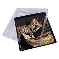 4x A Gorgeous Bengal Kitten Picture Table Coasters Set in Gift Box