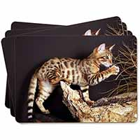 A Gorgeous Bengal Kitten Picture Placemats in Gift Box