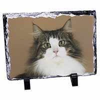 Tabby and White Cat Photo Slate Photo Ornament Gift