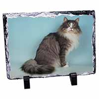 Norwegian Forest Cat Photo Slate Photo Ornament Gift