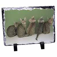Cute Ocicat Kittens Photo Slate Christmas Gift Idea