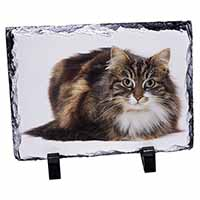 Beautiful Brown Tabby Cat Photo Slate Photo Ornament Gift