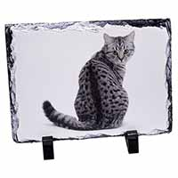 Silver Spot Tabby Cat Photo Slate Photo Ornament Gift