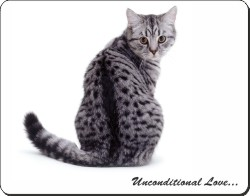 Silver Spotted Tabby Cat with Love, AC-68u