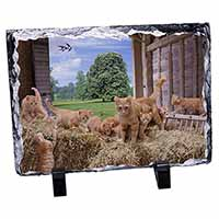 Ginger Cat and Kittens in Barn Photo Slate Photo Ornament Gift