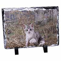 Kitten and White Tiger Watch Photo Slate Christmas Gift Idea