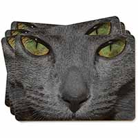 Grey Cats Face Close-Up Picture Placemats in Gift Box