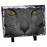 Grey Cats Face Close-Up Photo Slate Christmas Gift Ornament