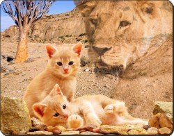 Kittens and Lioness Spirit, AC-84