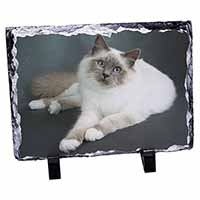 Adorable Birman Cat Photo Slate Christmas Gift Ornament