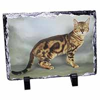 Bengal Gold Marble Cat Photo Slate Christmas Gift Idea
