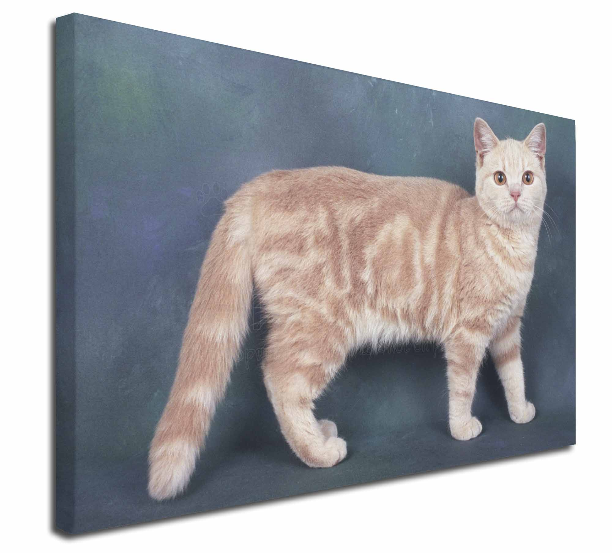 """Extra Large Picture Print D AC-192-C3020 Ginger Kitten 30/""""x20/"""" Wall Art Canvas"""