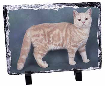 British Shorthair Ginger Cat Photo Slate Christmas Gift Idea