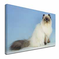 "Himalayan Cat Ex Large 30""x20"" Picture Wall Art"