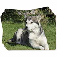 Alaskan Malamute Dog Picture Placemats in Gift Box