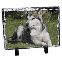 Alaskan Malamute Dog Photo Slate Christmas Gift Idea