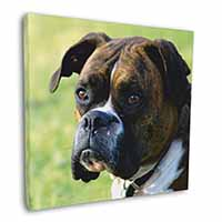"Brindle and White Boxer Dog 12""x12"" Wall Art Canvas Picture"