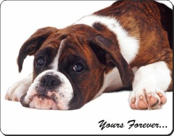"Boxer Dog ""Yours Forever..."", AD-B41y"