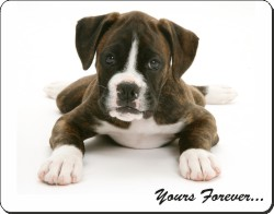 Boxer Puppy with Sentiment, AD-B51