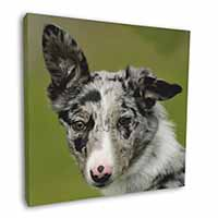 "Blue Merle Border Collie Dog 12""x12"" Wall Art Canvas Decor, Picture Print"