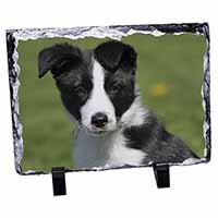 Border Collie Puppy Photo Slate Photo Ornament Gift
