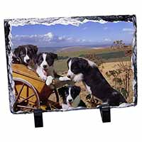 Border Collie Photo Slate Christmas Gift Idea