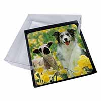 4x Border Collie Dog and Lamb Picture Table Coasters Set in Gift Box