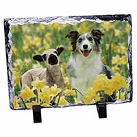 Border Collie Dog and Lamb Photo Slate Photo Ornament Gift