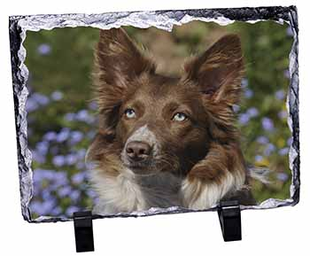 Red Border Collie Dog Photo Slate Photo Ornament Gift