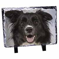 Border Collie Dog Photo Slate Christmas Gift Idea