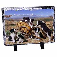 Border Collie in Wheelbarrow Photo Slate Photo Ornament Gift