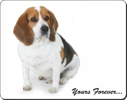 "Beagle Dog ""Yours Forever..."", AD-BEA4y"