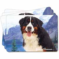 Bernese Mountain Dog Picture Placemats in Gift Box