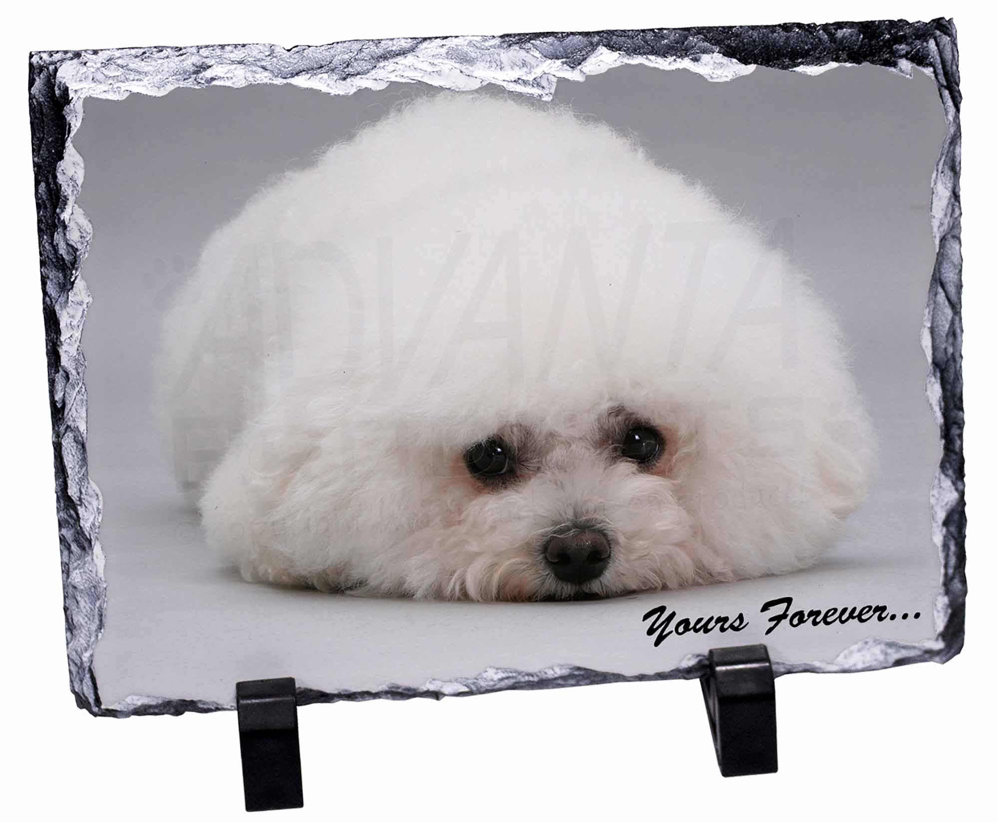 AD-BF3SL Bichon Frise Dog /'Yours Forever/' Photo Slate Christmas Gift Ornament